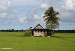Sulawesi home outside of Ujung Pandang (Sulawesi (Celebes))