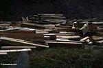 Cut log dibawa dari Kalimantan (Sulawesi (Celebes))
