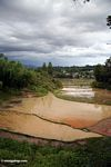 Muddy rice fields in Toraja land (Toraja Land (Torajaland), Sulawesi)