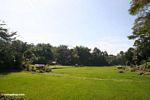 Rice fields at Lemo (Toraja Land (Torajaland), Sulawesi)