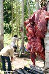 Pig entrails--prep for a traditional Torajanese funeral (Toraja Land (Torajaland), Sulawesi)