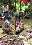 Slaughtering a pig at a funeral ceremony in Sulawesi (Toraja Land (Torajaland), Sulawesi)