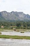 Rice field backed by mountains (Toraja Land (Torajaland), Sulawesi)