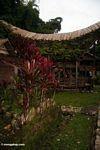 Ketu Kese (Toraja Land (Torajaland), Sulawesi)