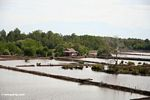 Mangrove forest cleared for settlement and shrimp farms (Sulawesi (Celebes))