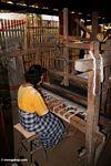Silk weaver (Sulawesi (Celebes))