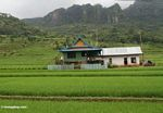 Home among green rice fields of south Sulawesi (Sulawesi (Celebes))