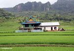 Colorful house among green rice paddies (Sulawesi (Celebes))