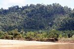 Oil palm plantation encroaching on natural forest in Malaysia
