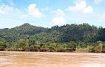 Palm oil  displacing native tropical  forest in Malaysia