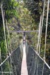Tourist on a canopy walkway in Malaysia