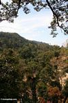 Malaysian tropical forest