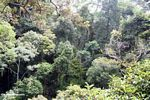 Rain forest canopy as viewed from the treetops