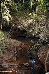 Blackwater creek in the rain forest