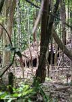 Orang asli settlement in the rainforest