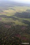 Sections of rain forest cut  for slash-and-burn agriculture and cattle pasture