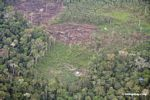 Sections of rain forest cut  for slash-and-burn agriculture