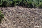 Clear-cutting in the Amazon rainforest as viewed from above by airplane