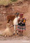 Woman with llama, sheep, alpaca