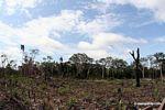 Agricultura de tumba, roza y quema en Perú