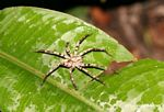 Rainforest spider