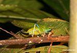 Wildlife [tambopata-Tambopata_1028_4561]