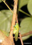 Wildlife [tambopata-Tambopata_1028_4566]