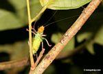 Wildlife [tambopata-Tambopata_1028_4567]