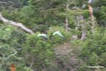 Mealy parrots (Amazona farinosa) in flight over rainforest