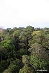 Rainforest canopy; including palm and purple flowering trees