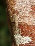 Camouflaged praying mantis on tree trunk
