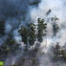 Indonesian police arrest hundreds in connection to burning land