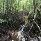 Sri Lanka set to become first nation to protect all mangroves