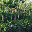 """""""Carbon farming"""" good for the climate, farmers, and biodiversity"""
