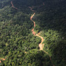 Logging roads have long-lasting impacts on forests