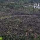 Five technologies help thwart illegal logging by tracing wood's origin